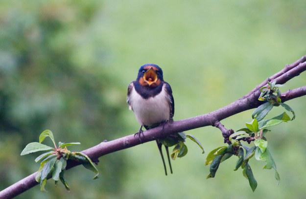 Screaming Birds01