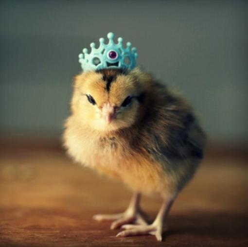 可愛いティアラでお姫様