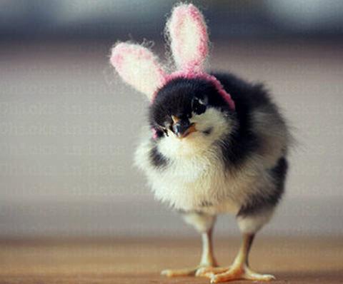 鳥だけどウサギです!