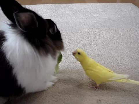 お野菜返して〜!!