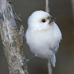 まんまるな鳥の写真14枚!004