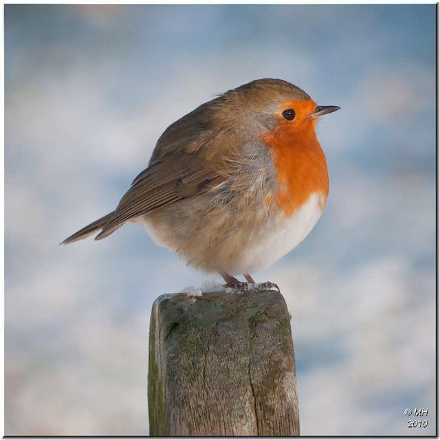 まんまるな鳥の写真14枚!005