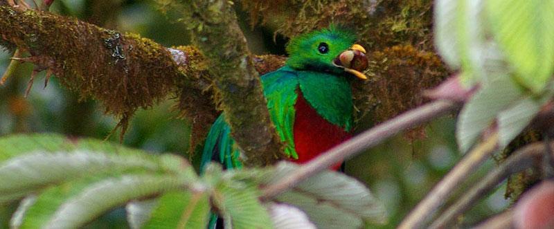 10-quetzal