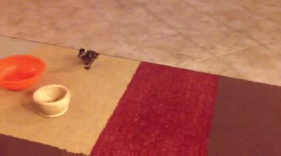 あ、ネコさんだ!