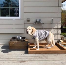 犬用足洗い場
