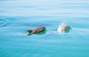 気持ちよさそうに泳ぐ親子イルカ
