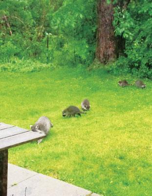 裏庭にはこんな珍客もたびたび訪れた
