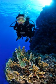 Diver and Fire Coral (681x1024)