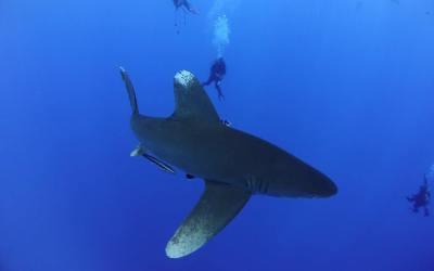 Trip Report: Hurricane, 25 April 2018 – Shark Quest Itinerary