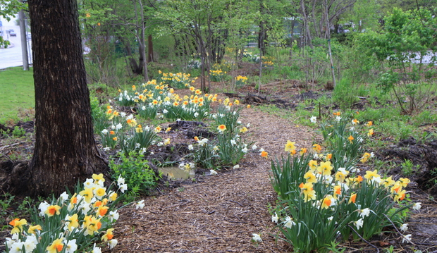 woodland walk with flowering bulbs