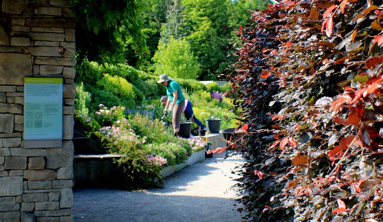Volunteer Botanical Gardens Become A Volunteer Toronto