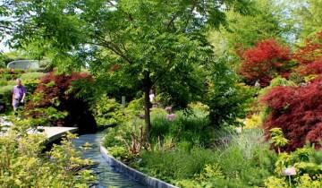 water channel garden 2-small