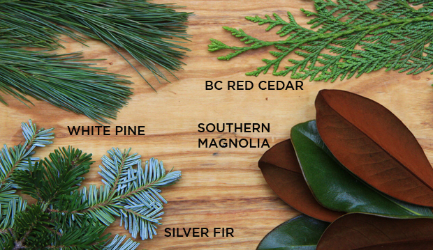 wintergreens_labeled