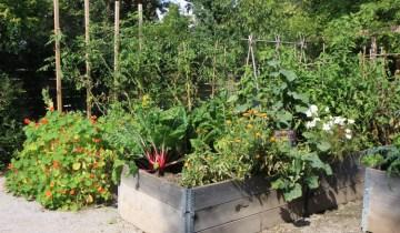 groundbreaking food garden Fall 2014 web