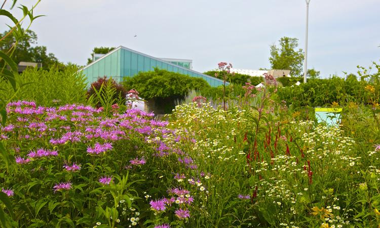 garden july 2016 web credit Malcolm Geast