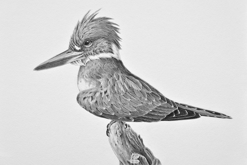 Art Exhibit | Prints and Drawings by Alan Li