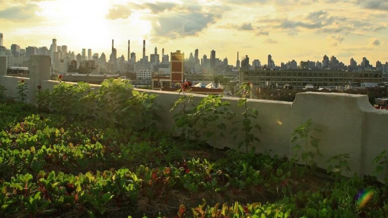 Documentary | Growing Cities