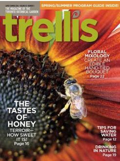Trellis Summer 2016