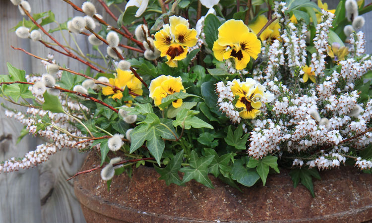 Container Gardening: Drama for Every Season