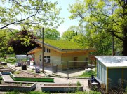 A Green Green Roof