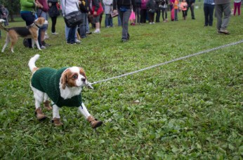Scarborough's cutest medium sized dog, Pierre, struts his stuff.