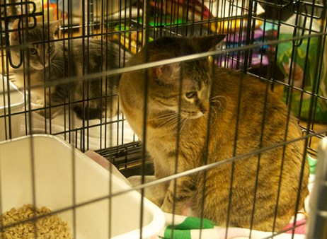 Jay Jay and Annabelle sitting in their cages at the Wag, waiting to be adopted.