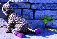 A tiny Cheetah crawls around Riverdale Farm during its annual Halloween event this past weekend.