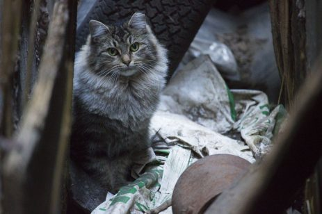 The tabby that has one of its ears clipped. A sign that it has been through the trap-neuter-return program.