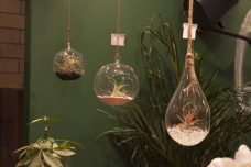 An array of miniature terrariums on display.