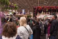 Crowds gather to listen to a lively horticulture speakers.