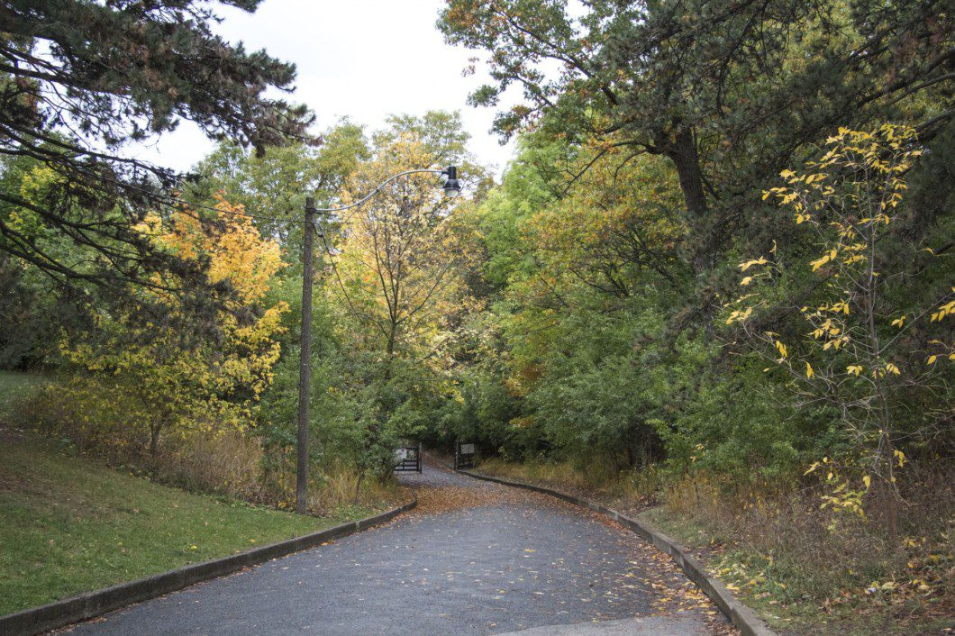 A path in Autumn at High Park