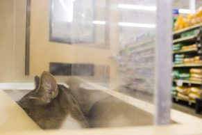 An overweight cat lounges in the main display case.