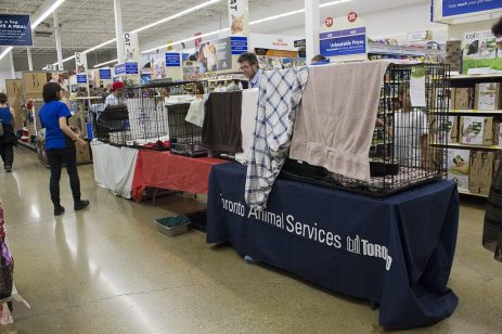 The adoption display set up by Toronto animal services on Sept. 16 during a PetSmart national adoption weekend.