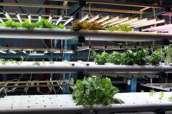 Leafy salad Greens