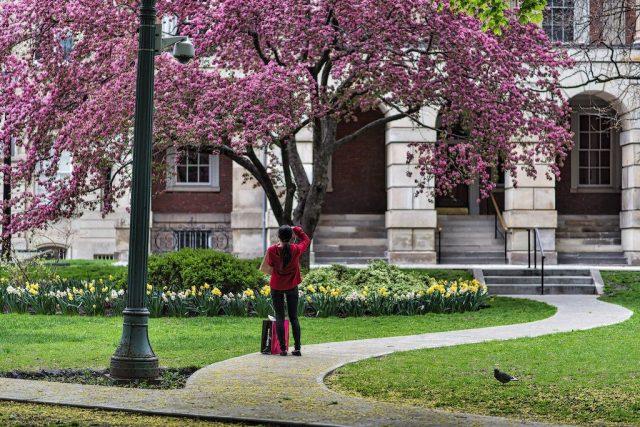 Spring At Osgoode Hall