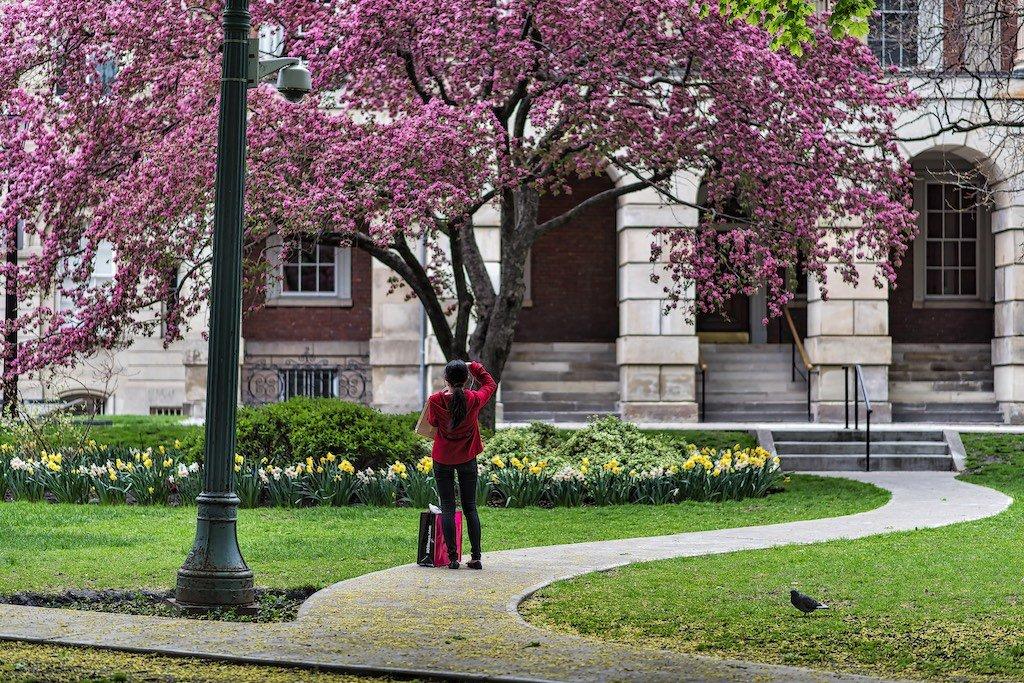Osgoode in Spring