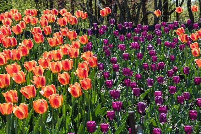 Edwards Gardens in Spring