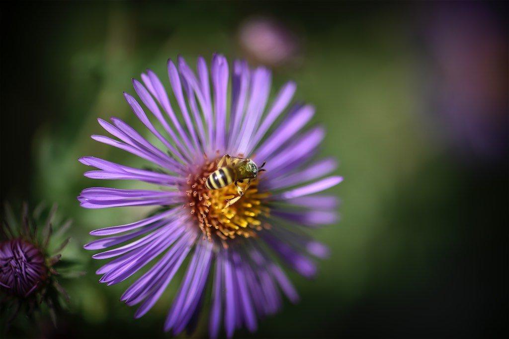 Bee at Toronto Botanical Gardens