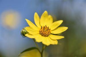 Macro_Edwards_Gardens-3.jpg