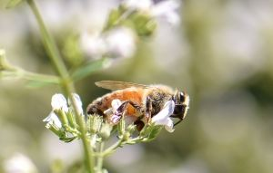 Bee_Edwards_Gardens.jpg