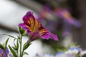 Allan_gardens-16.jpg
