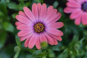 Allan_gardens-8.jpg