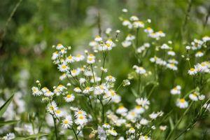 Flower_Gardens-2.jpg