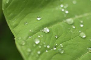 Flower_macro_leaf.jpg