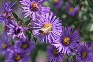 Flowers_Macro-14.jpg