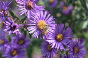 Flowers_Macro-15.jpg
