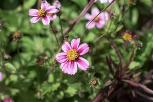 Flowers_Macro-31.jpg
