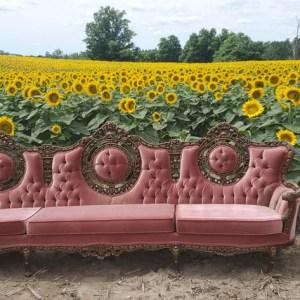 davis-sunflowers-34