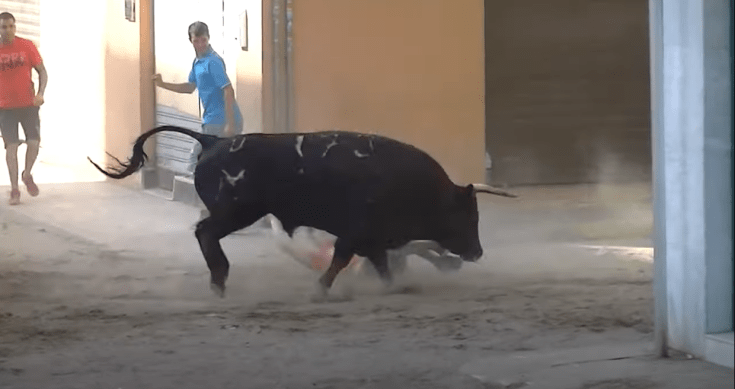 Susto Rafelbuñol toros