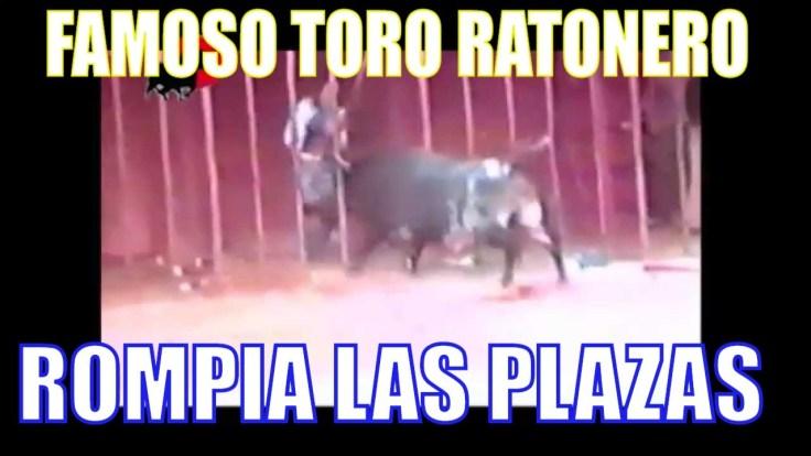 Toro ratonero